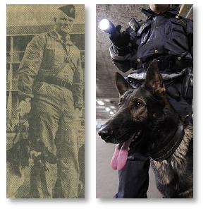 hundar-genom-tiderna
